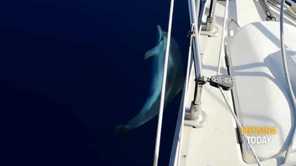 Magia al largo di Stromboli: un branco di delfini nuota nelle acque trasparenti