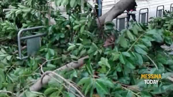 Paura in piazza Cavallotti: grosso ramo si schianta al suolo e invade la linea del tram
