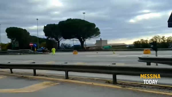 Autostrada deserta, solo tre mucche a spasso raggiungono il casello di Villafranca