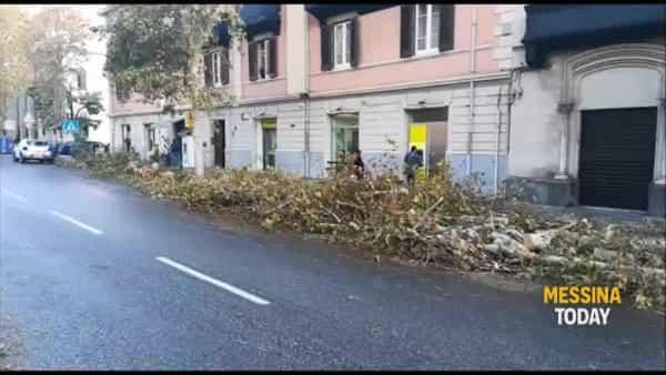 """Crollo alberi, l'esperto Tignino: """"A schiantarsi piante prive di radici e lasciate crescere troppo"""""""