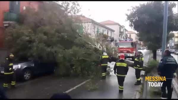 Albero caduto in via La Farina: traffico in tilt