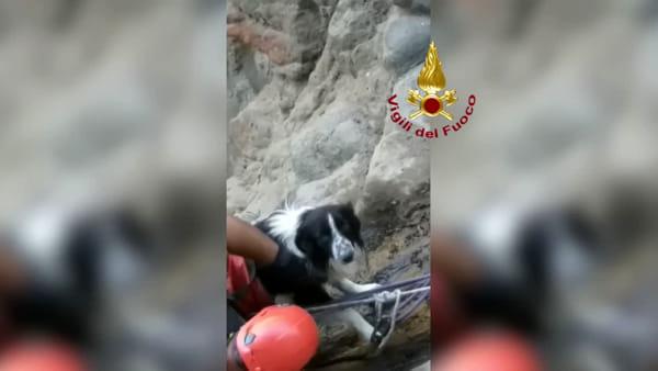 Vulcano, cane cade in un dirupo: le coccole del vigile del fuoco che lo aiuta con la corda a tornare su | VIDEO
